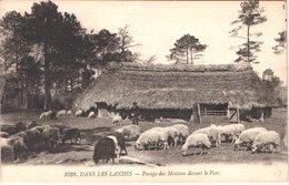 FR40 LANDES - Berger Landais Et Ses Moutons - Animée - Belle - Sonstige Gemeinden