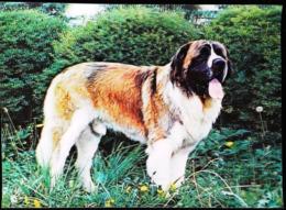 Chien Saint Bernard - CARTE 3 D - 3 DIMENSION POSTCARD - Dogs