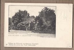 CPA GRECE - AMAROUSSI - Bois De Pins à Amaroussi - ENTIER POSTAL + Timbre Incrusté Gauffré Postes Helléniques - Griekenland