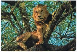 ANIMAUX  LION  CPM  TBE  ZO90 - Lions
