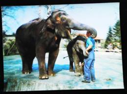 ELEPHANT ELEPHANTEAU Et Gardien De Zoo - CARTE 3 D - 3 DIMENSION POSTCARD - Elephants