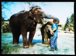 ELEPHANT  - CARTE 3 D - 3 DIMENSION POSTCARD - Elephants