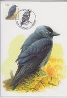 België, Maximumkaarten, Nr 3627 Kauw- Corvus Monedula - 2001-2010
