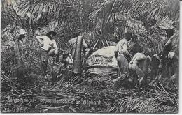 Auguste Béchaud - Congo Français - Dépouillement D'un éléphant - - French Congo - Other