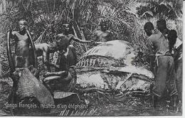 Auguste Béchaud - Congo Français - Restes D'un éléphant - - French Congo - Other