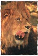 ANIMAUX  LION  CPM  TBE  ZO94 - Lions