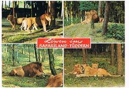 ANIMAUX  LIONS  ET TIGRES  CPM  TBE  ZO95 - Lions