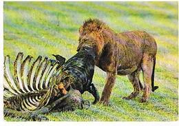 ANIMAUX  LION CPM  TBE  ZO98 - Lions