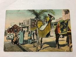 EGYPT - CHAMEAUX D' UN MARIAGE ARABE  - 1914 - Pyramides