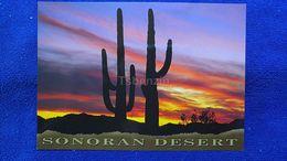 Sonoran Desert USA - Autres