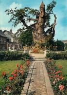76 - Allouville-Bellefosse - Le Vieux Chêne Et Ses Deux Chapelles - Arbre Remarquable - Fleurs - Carte Neuve - CPM - Voi - Allouville-Bellefosse