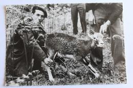 Chambord - Les Résiliations Du Conseil Supèrieur De La Chasse - Un Jeune Mouflon De Corse Avant Son Lâcher Dans La Rése - Chambord