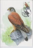 België, Maximumkaarten, Nr; 3611, Torenvalk, Falco Tinnunculus 29-01-2007 - 2001-2010
