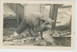 SAINT PIERRE ET MIQUELON - Carte Photo Renard Femelle De L'ELEVAGE D'ANIMAUX A FOURRURE R. DE LA VILLEFROMOY En 1947 - Saint-Pierre-et-Miquelon