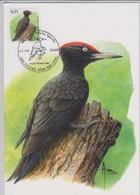 België, Maximumkaarten, Nr. 3939 Pic Noir / Zwarte Specht 21-09-2009 - 2001-2010