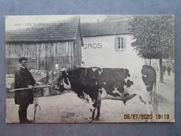 CPA 61 Les Normands LE TAUREAU  écrite ECHAUFFOUR Ste Gauburge Ste Colombe Famille  COTREL à Vrigny  1924 - Frankreich