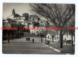 SALCITO - VIA REGINA ELENA   F/GRANDE VIAGGIATA 1963 ANIMATA - Campobasso