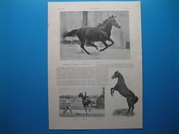 """(1905) """" FLYING FOX """" L'étalon D'un Million (document De 4 Pages) - Historical Documents"""