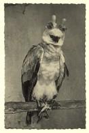 A2018[Postkaart] Dierentuin - Antwerpen ... / Harpij ... (Thill, Zoo, Photothill, Nels) - Antwerpen