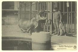 A2021[Postkaart] Anvers - Jardin Zoologique / Hippopotame (G. Hermans) [nijlpaard Verzorger Zoo Dierentuin Antwerpen] - Antwerpen