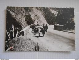 Algérie - BLIDA - Gorges De La Chiffa (transports A Dos D'ane) - Blida