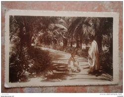 Algérie - BISKRA Allée Des Palmiers -jardin Laudon - Garden Of Allah - Biskra