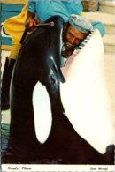 Caalifornia San Diego Sea World Shamu The Killer Whale 1972 - San Diego