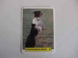 Dog/Chien Cão Pastor Escocês Da Fronteira Portugal Portuguese Pocket Calendar 1993 - Calendars