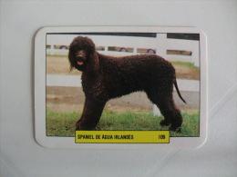 Dog/Chien Cão De Água Irlandês Portugal Portuguese Pocket Calendar 1993 - Calendars