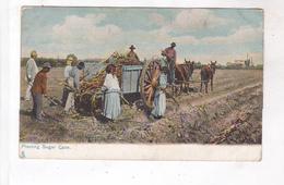 CPA USA PLANTING SUGAR CANE - Vereinigte Staaten