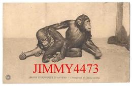 CPA - JARDIN ZOOLOGIQUE D' ANVERS - Chimpanzé Et Orang Outang - Edit. HERMANS à Anvers - Scans Recto-Verso - Antwerpen
