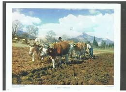 Agriculture : Labour Traditionnel D.P. N°113 H De Février 1964 Photo N°1 - Repro's