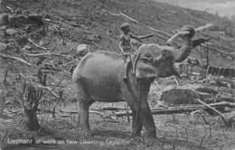 Elephant At Work On New Clearing , Ceylon   Sri Lanka   M 2946 - Sri Lanka (Ceylon)