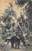 Ceylon   Sri Lanka Elephant Greetings From Ceylon          M 2960 - Sri Lanka (Ceylon)