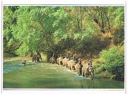 ANIMMAUX   ELEPHANTS     CPM  TBE  ZO141 - Elephants