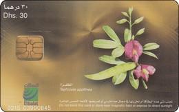 UAE Chip Phonecard Blumen Flower Tephrosia - United Arab Emirates
