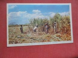 Cutting Sugar Canes From Estate  Jamaica        Ref 4103 - Jamaica