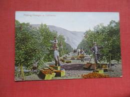 Pocking Oranges In California>      Ref 4103 - Vereinigte Staaten