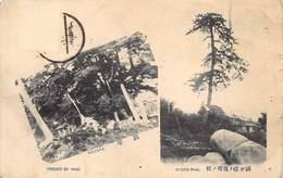 Japan  日本    Osaka Ryoto Pine , Keizuka      M 3012 - Osaka