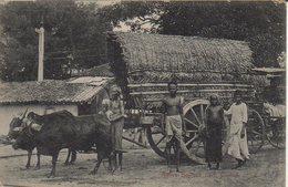 CEYLON NATIVE BULLOCK CART - Sri Lanka (Ceylon)