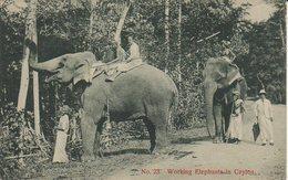 CEYLAN WORKING ELEPHANTS IN CEYLON - Sri Lanka (Ceylon)