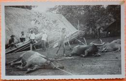 CARTE SAIGON VIETNAM - FETE DE TUER DES BUFFLES - 1951 - 2 SCANS-13 - Viêt-Nam