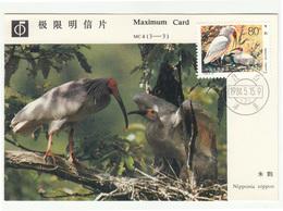 China, Crested Ibis (Nipponia Nippon) MC 1984 B200601 - Storks & Long-legged Wading Birds