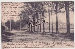Westerloo (tapijtenfabriek 1909) - Westerlo