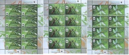 370 - Belarus - 2010 - Dragonfly The Green Snaketail WWF - 3 Sheetlets Of 8v - MNH - Lemberg-Zp - Belarus