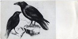 Uccelli Rapaci - Cm. 20,8 X 10,5 - Non Classificati