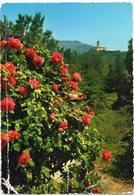 Paesaggio Montano Con Roseto - Photographs