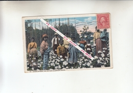 DOWN WHERE THE COTTON BLOSSOMS GROW   1900 - United States