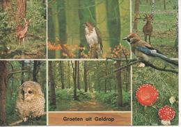 Geldrop - Geldrop