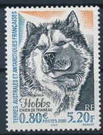 TAAF  -  2000  ,  Schlittenhund Hobbs - Terre Australi E Antartiche Francesi (TAAF)